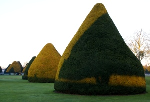 Yew shadow on yew, Hampton Court Palace